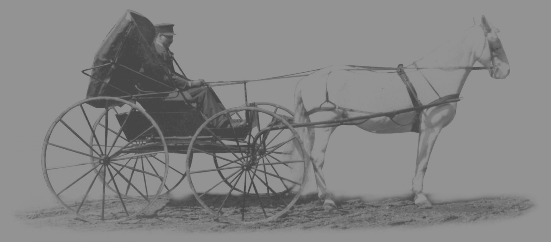 Dowd Horse and Buggy Graphic