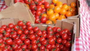 Picture of some small tomatoes for blog: Understanding Farm Insurance